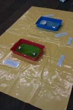 Sensory rice trays
